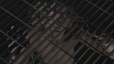 Абсолютно голая Никки Эйкокс в фильме «Темный мир» фото #16